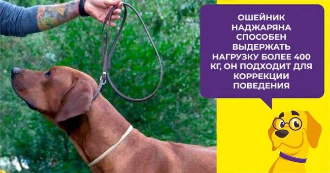 Рулетки для собак – устройство, принцип работы, особенности разных видов, как выбрать?