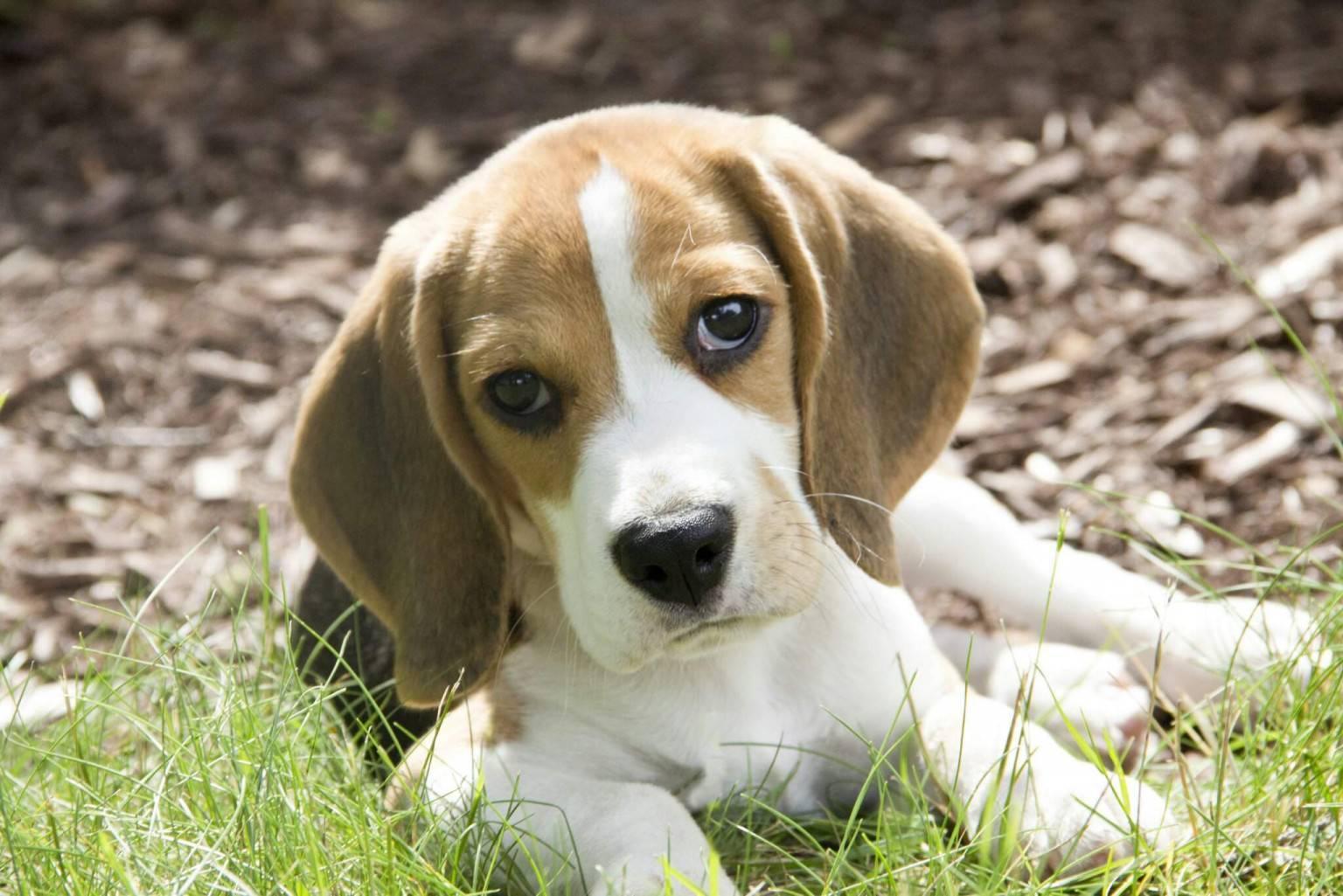 Топ 12 ᐈ самые умные породы собак в мире с фото