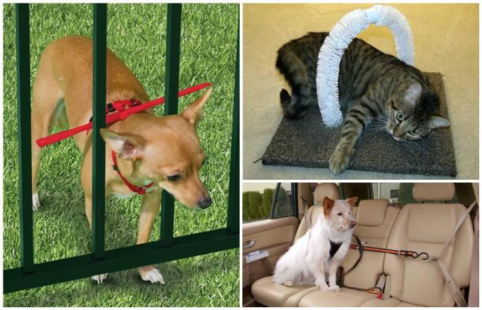 Лайфхаки для котов и кошек, которые упростят жизнь. лайфхаки для котиков: как сделать совместную жизнь легче и веселее лайфхак – простой домик для кота