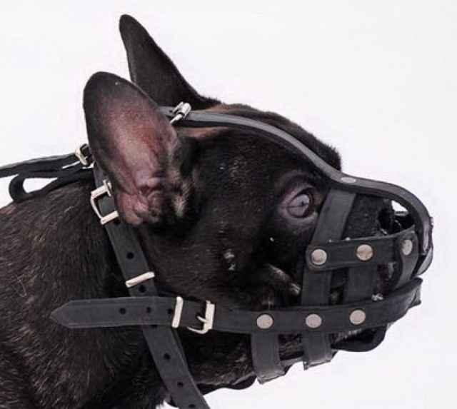 Как выбрать щенка французского бульдога – советы и рекомендации