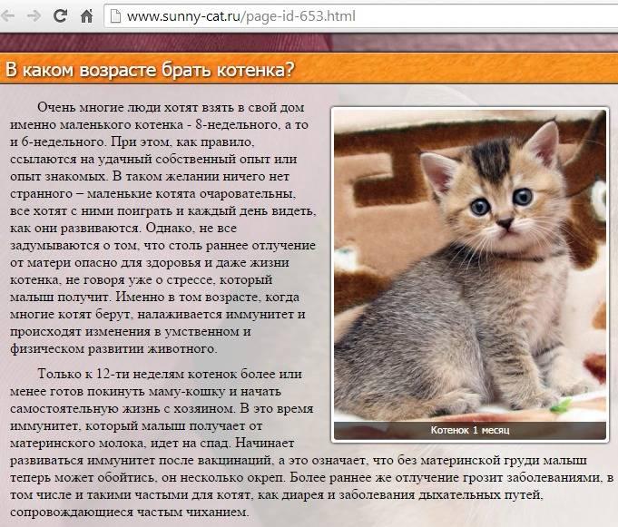 Как рассчитать до какого возраста растут кошки?