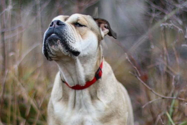 Самые умные породы собак в мире - рейтинг по интеллекту