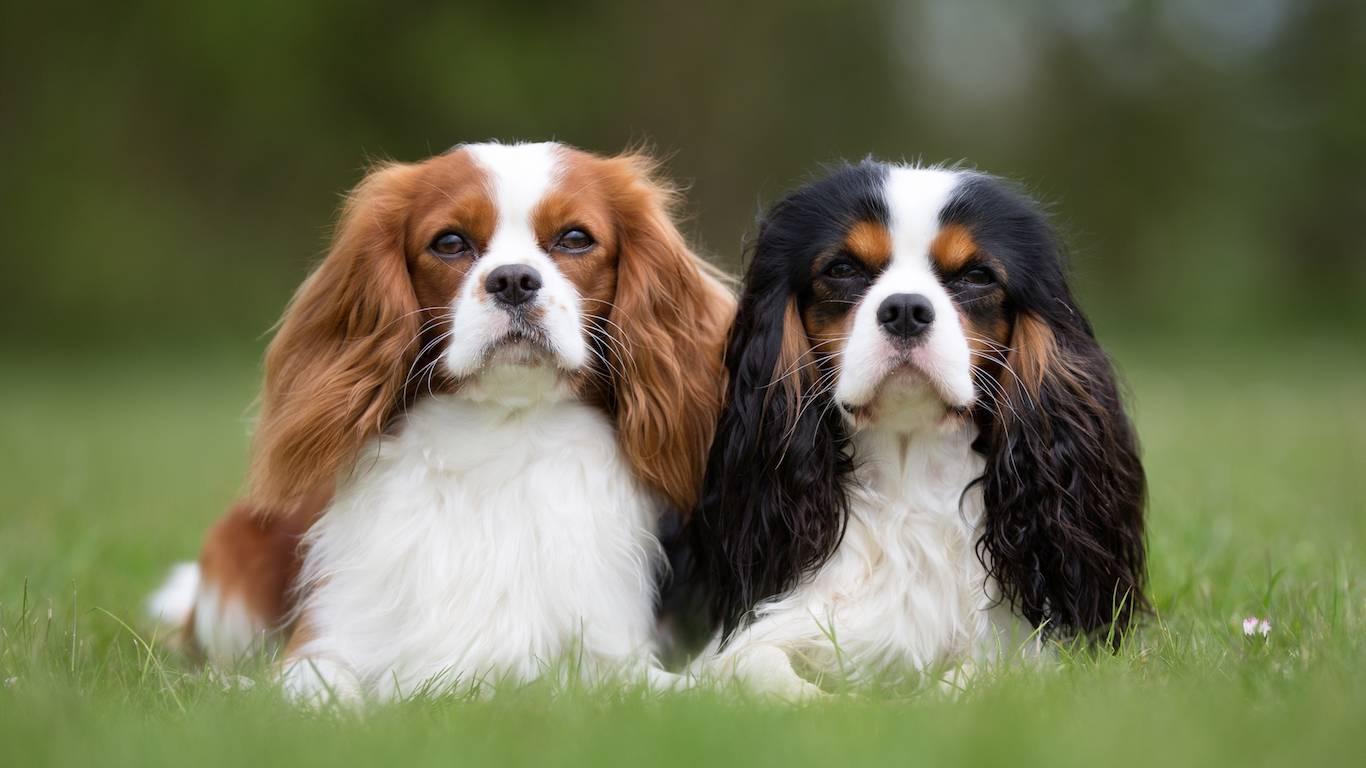 Английские породы собак – самая большая группа признанных пород (+ фото)