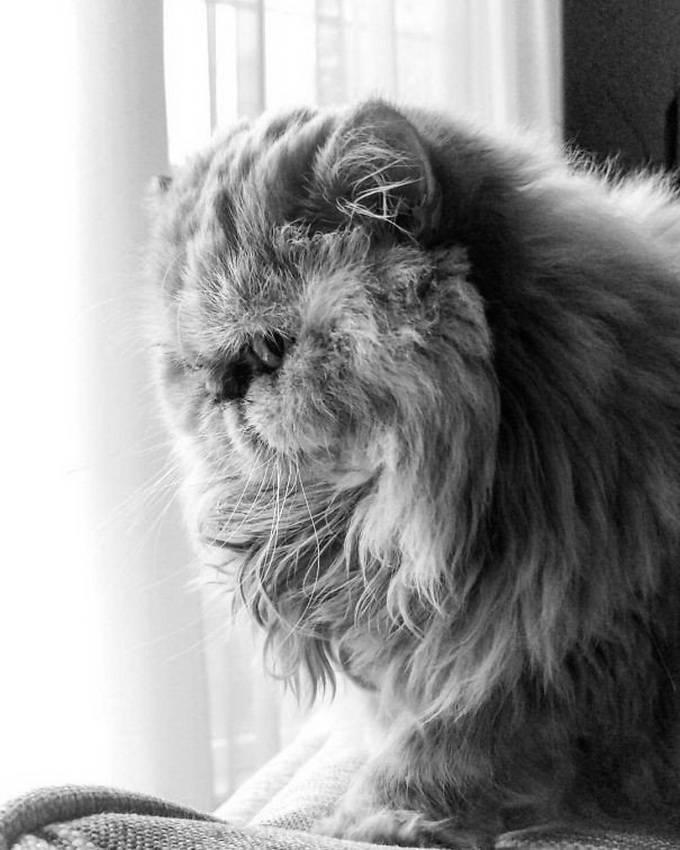 Лохматые породы собак с фотографиями и названиями