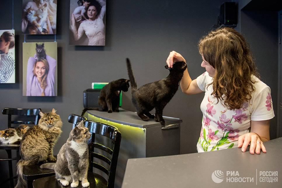 Кафе с кошками в россии и других странах