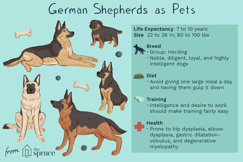 Характер немецкой овчарки