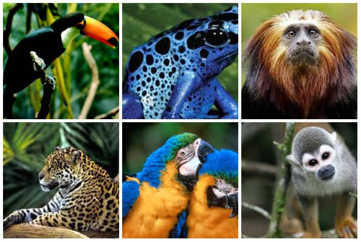 Животное которое может обитать во всех средах обитания. среды жизни и места обитания | интересные факты
