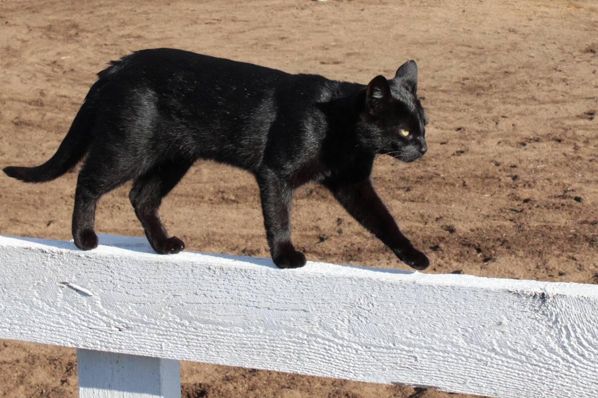 Почему кошка ходит за мной по пятам? | сайт вет-рум.ру