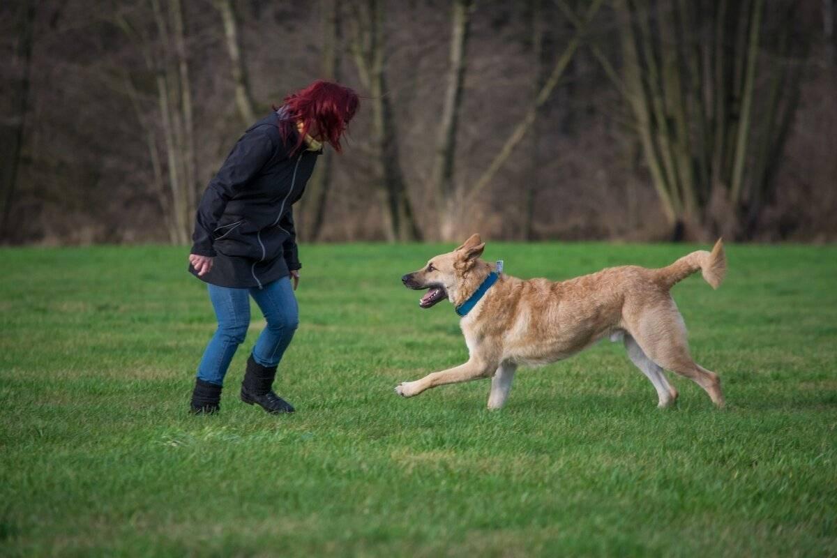 Как отучить собаку лаять без повода: советы кинолога