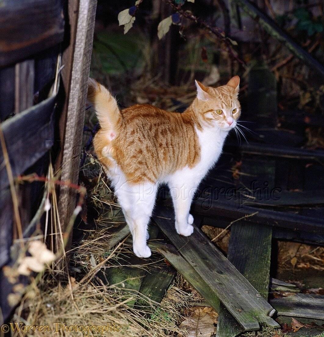 Кот метит углы в доме: как отучить без кастрации