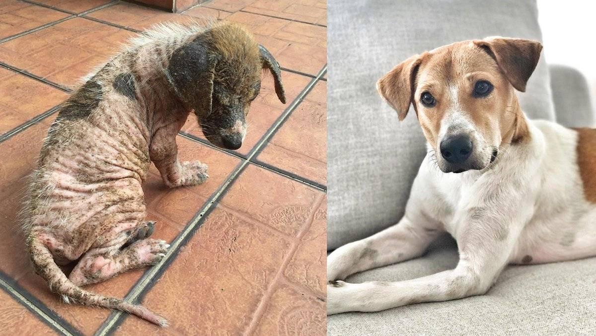 Почему собака ест землю: что не хватает, как отучить, психологические причины