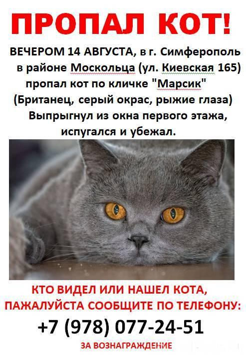 Как найти потерявшуюся кошку