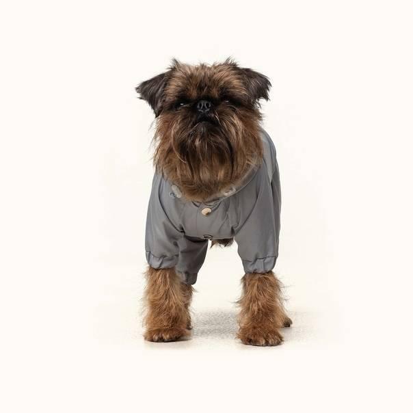 15 лучших моделей одежды для собак
