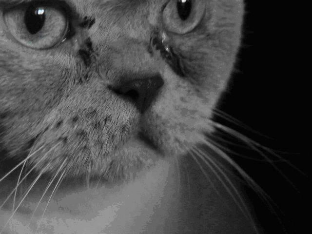 Почему у кошки слезятся глаза:  что делать и чем лечить