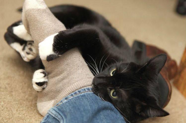 Почему кошки роняют вещи и как решить эту проблему