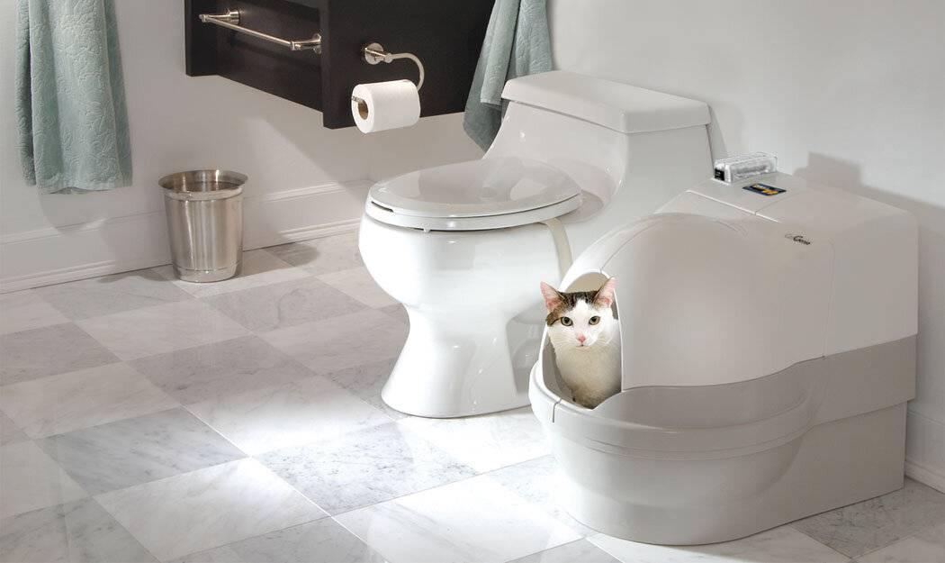 Автоматический туалет для кошек: как питомцы привыкают к технологичным лоткам // нтв.ru