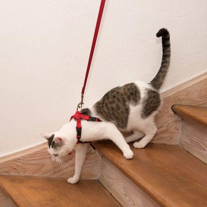 Как сделать амуницию для кошки своими руками