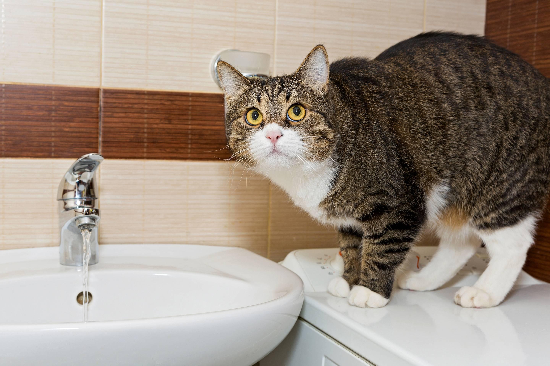 Как помыть кота, если он боится воды и царапается, что делать в домашних условиях?