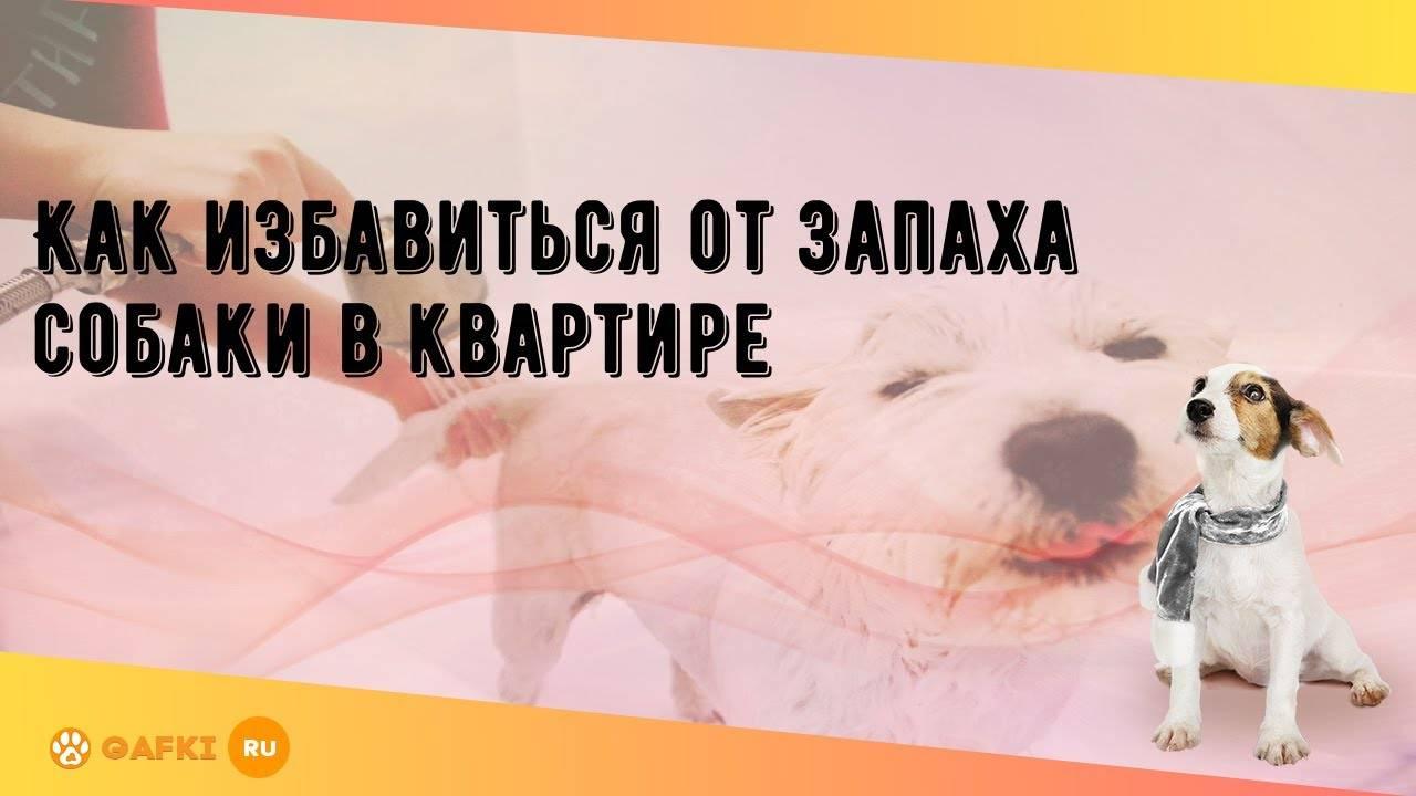 Как избавиться от неприятного запаха изо рта у собак: проверенные способы