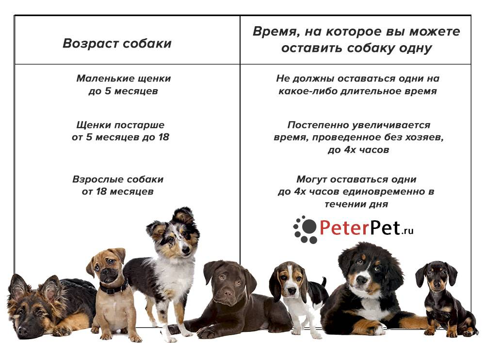 В каком возрасте лучше брать щенка: мнение специалистов