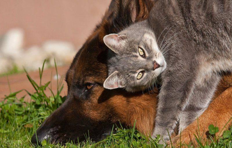 Как подружить двух кошек в одной квартире: советы по примирению