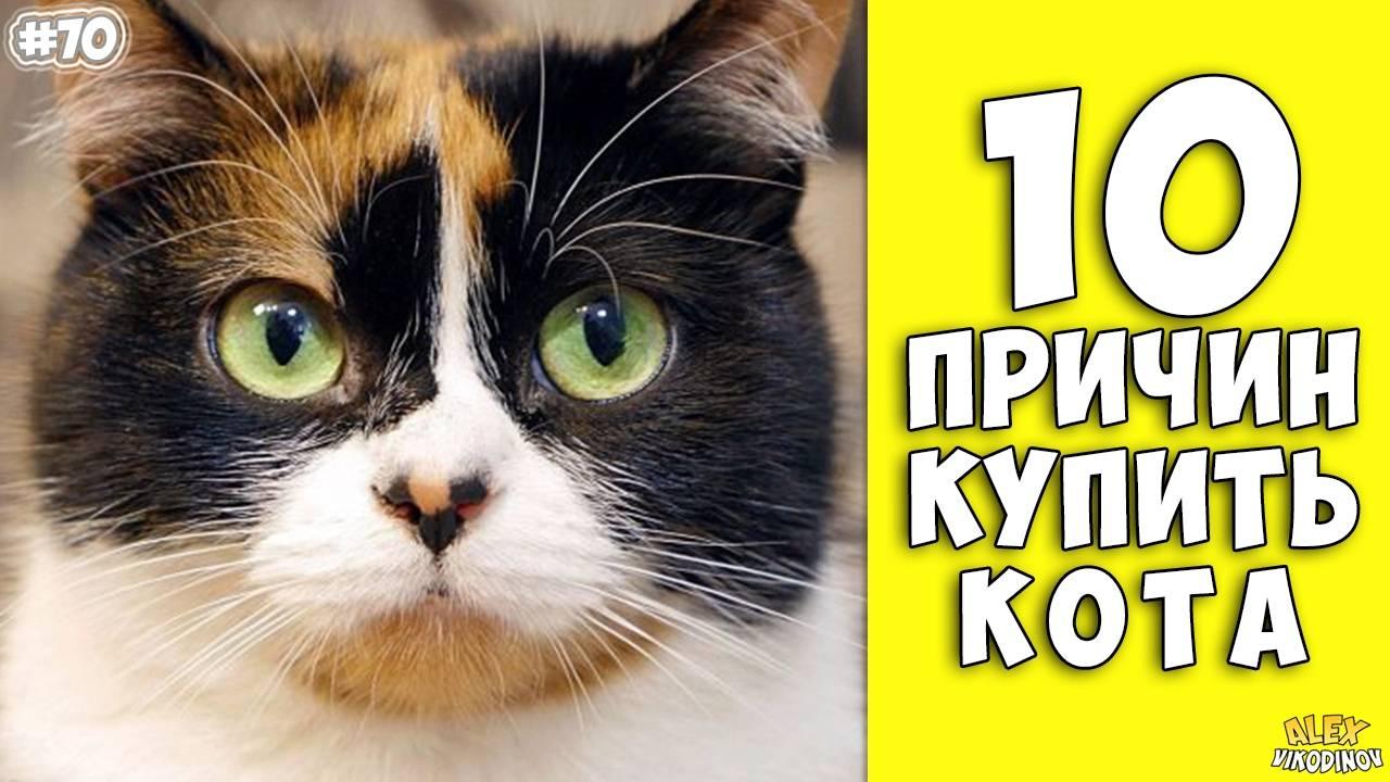 10 научно обоснованных причин завести кота - квартира, дом, дача - медиаплатформа миртесен