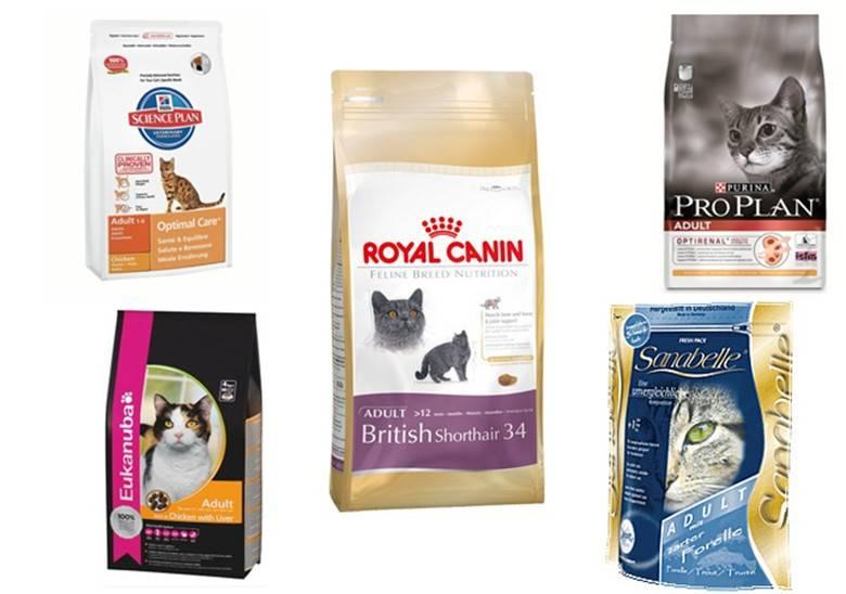 Заболевания почек у кошек - причины и признаки почечной недостаточности | хиллс