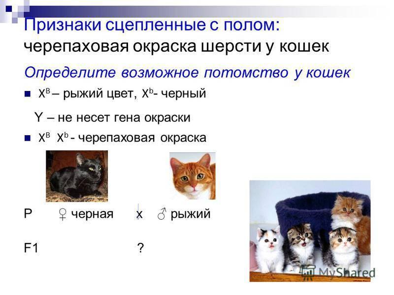 Узнаём котёнка по окрасу: как связан характер и окрас кота или кошки