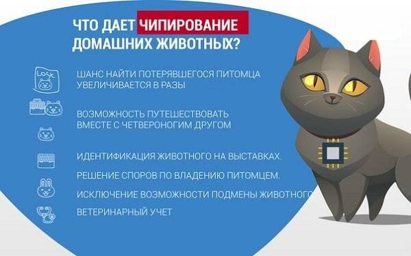 Закон об ответственном обращении с животными: что разрешено и запрещено