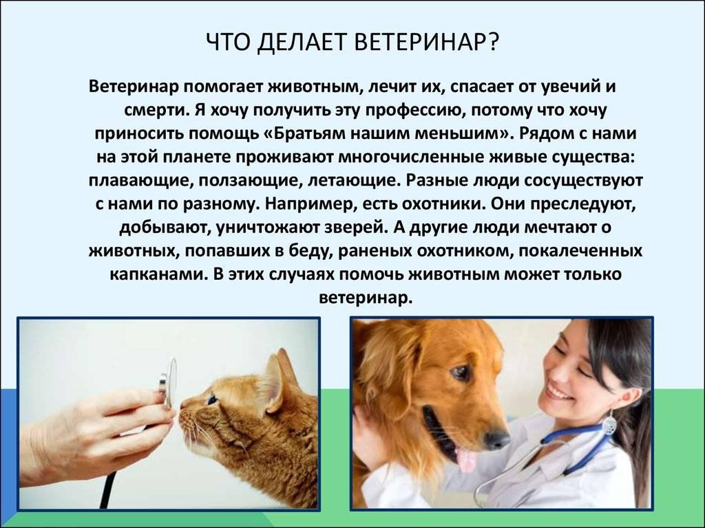 Язва желудка у кошки - лечение, диагностика | ветклиника берлога