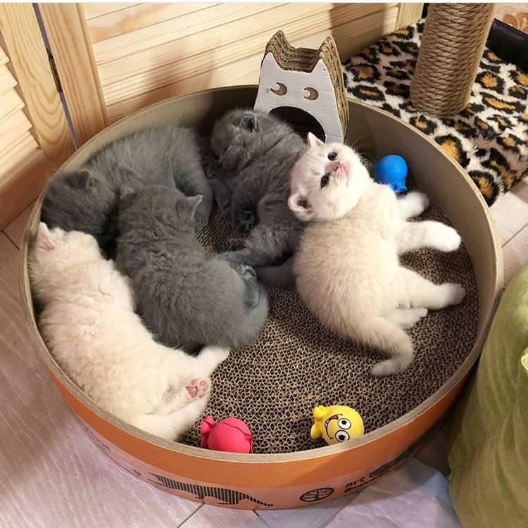 """Как выбрать котенка для дома: советы экспертов   блог ветклиники """"беланта"""""""