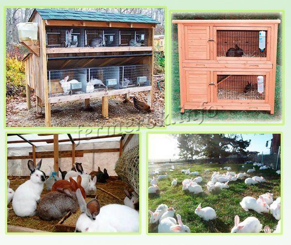 Разведение кроликов в домашних условиях: выгодный бизнес с окупаемостью за полгода