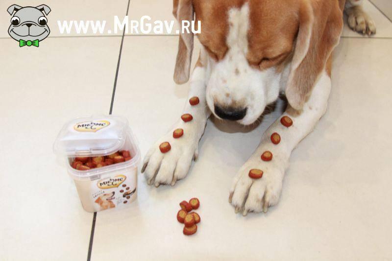13 рецептов домашних лакомств для собак своими руками