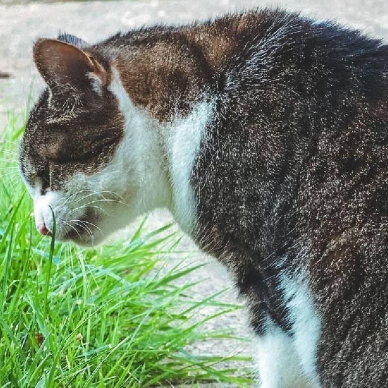 Кота рвет белой пеной: почему, что делать