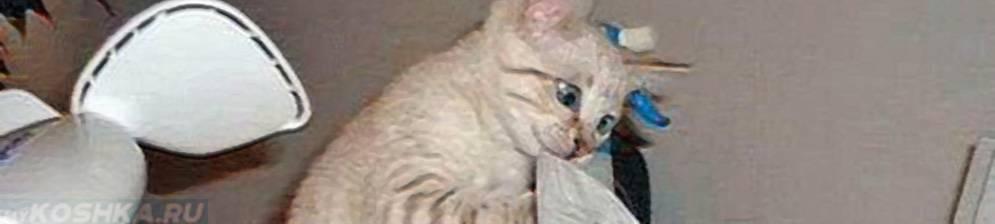 Что делать, если домашний кот чихает, у него текут сопли и слезятся глаза?