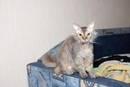Кошка-метис: что это за порода, виды помесей