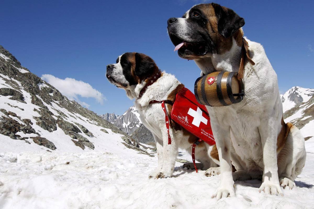 Породы собак для службы в мчс