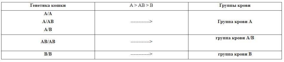 Биохимический анализ крови у кошек расшифровка норма таблица: общий анализ крови кошки