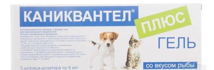 Каниквантел для кошек и котов