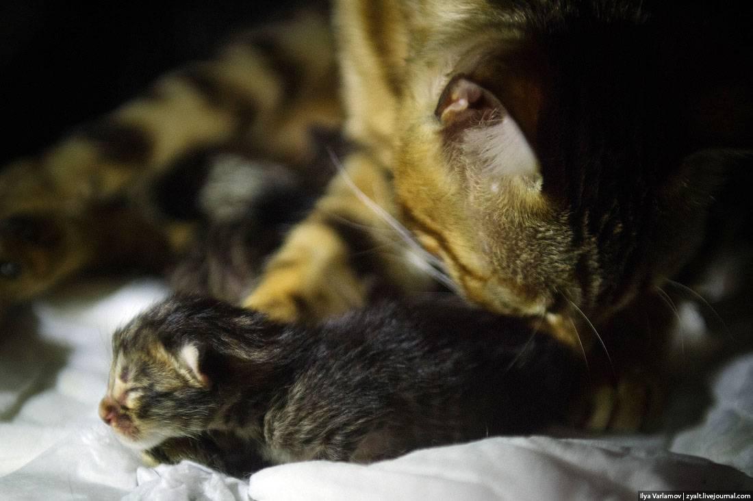 Когда котята должны открывать глаза