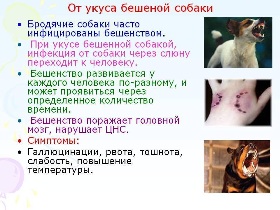 Бешенство у собак: 10 признаков, формы заболевания, прогноз