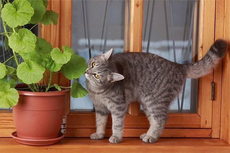 Неприятный запах от кошки: причины возникновения и методы устранения запаха