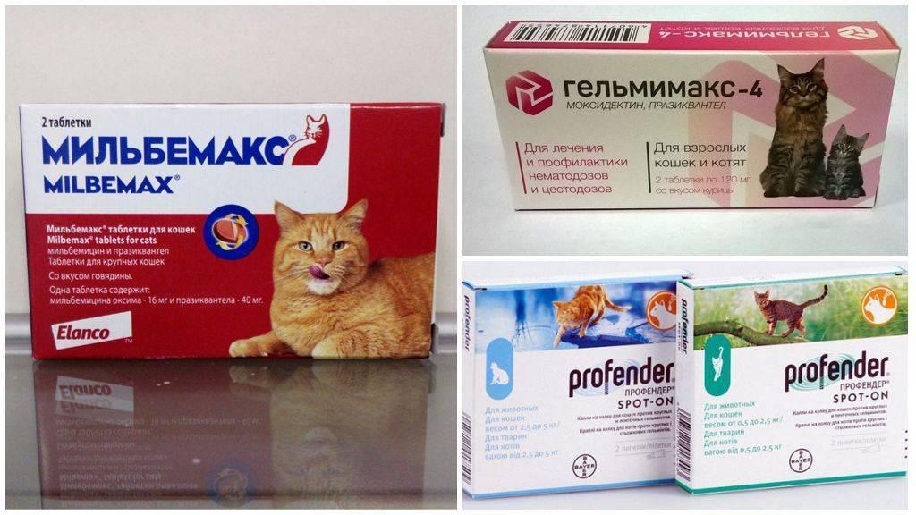 Как проглистогонить кошку в домашних условиях – схемы профилактики, обзор лучших препаратов
