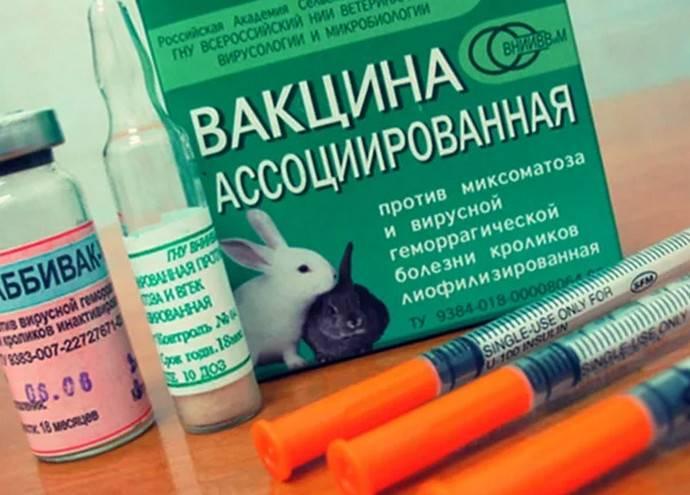 Как использовать ассоциированную вакцину для кроликов