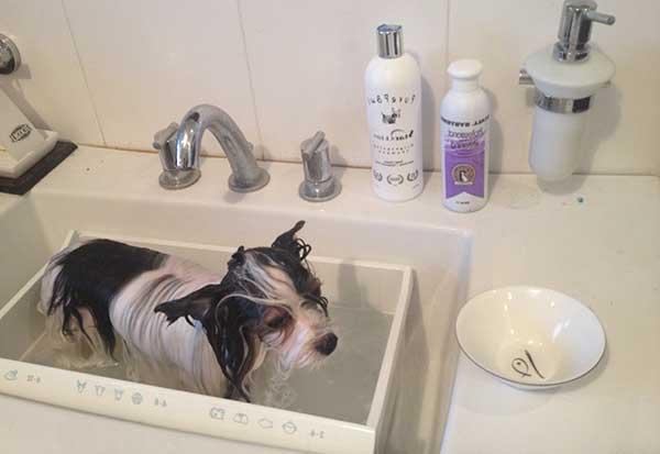 Чистотел (мыло дегтярное) для собак и кошек   отзывы о применении препаратов для животных от ветеринаров и заводчиков