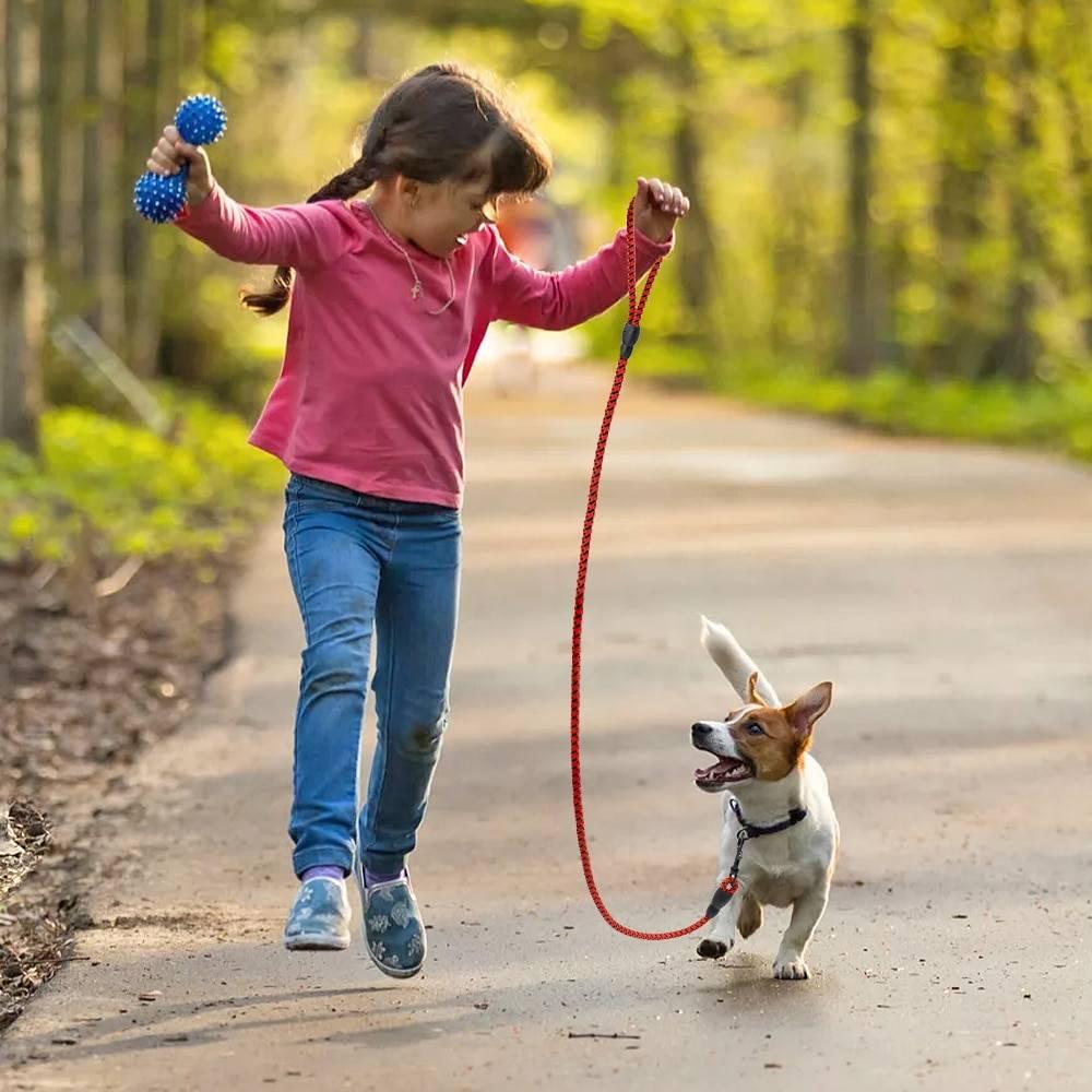 Как отучить собаку тянуть поводок: на прогулке, на улице, щенка или взрослую собаку