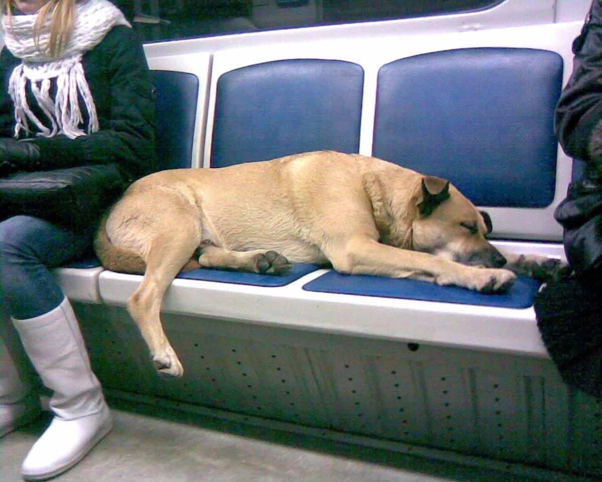 Правила перевозки собак в метро