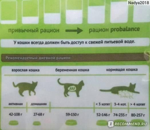 Особенности питания и кормов для беременных и кормящих кошек   hill's pet