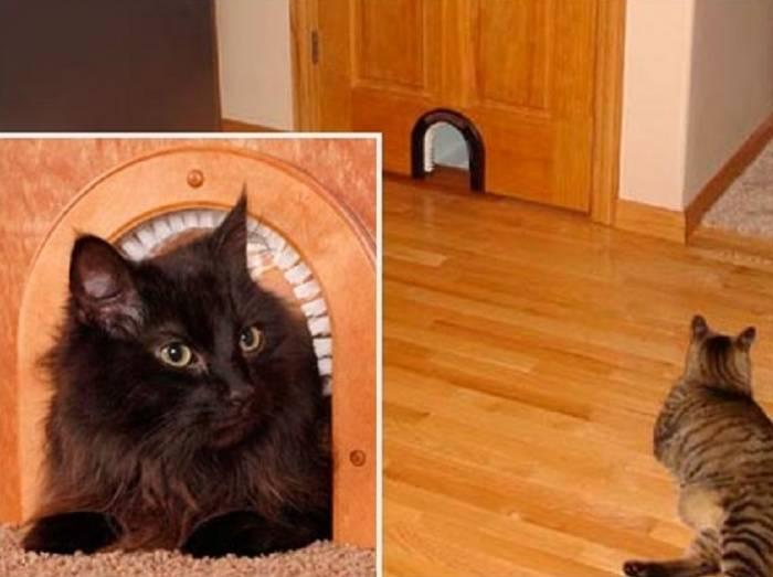 Дверь для кошки — проектирование, установка, рейтинг готовых моделей и цена современной двери для кошки (115 фото)