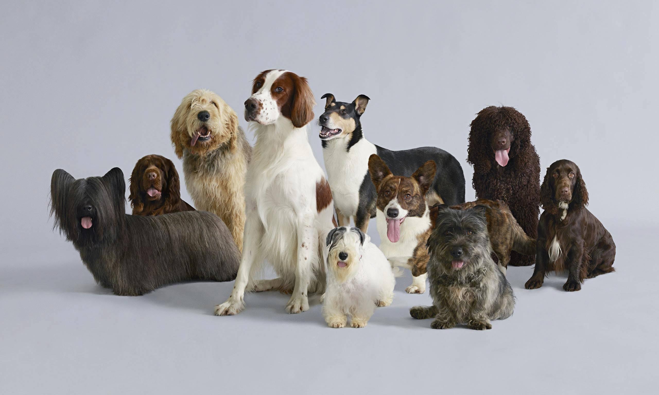 Самые умные породы собак - рейтинг самых умных пород собак в мире с названиями и фотографиями | petguru